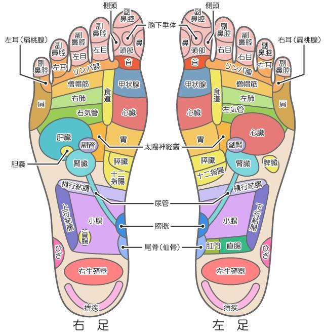 足の裏のツボの位置