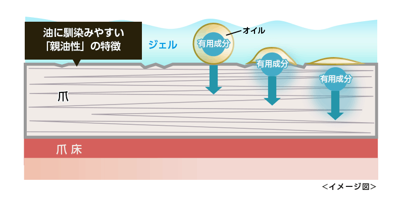 クリアネイルショットの有用成分のイメージ