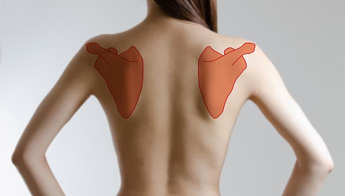 肩胛骨の位置